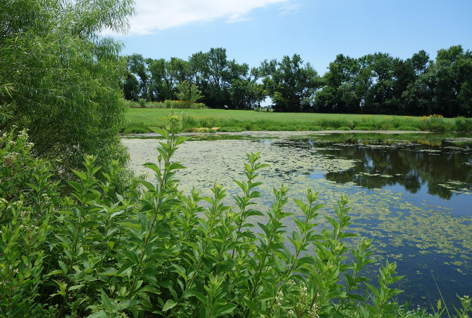 A view of the dense plant-life that surrounds the pond at the Dyck Arboretum of the Plains in Hesston, Kansas.