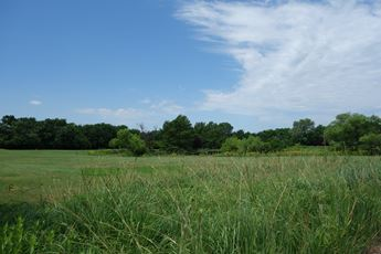 A view of the plentiful grass that thrives because of the Equus Beds Aquifer.