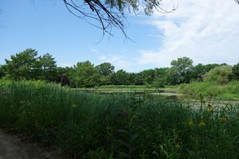 A view of the lush grasses and greenery that surround the Dyck Arboretum of the Plains in Hesston, Kansas.